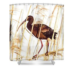 White Faced Ibis In Reeds Shower Curtain by Robert Frederick