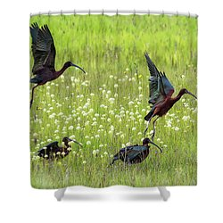 White-faced Ibis Rising, No. 1 Shower Curtain