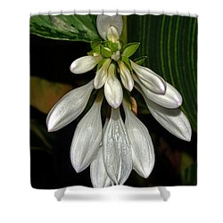 Shower Curtain featuring the photograph Hosta - Royal Standard  by George Bostian