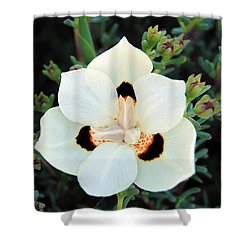 Peacock Flower Shower Curtain