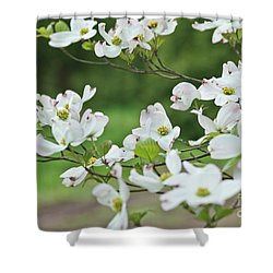 White Flowering Dogwood Shower Curtain