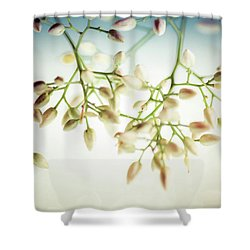 White Flowers Shower Curtain by Bobby Villapando
