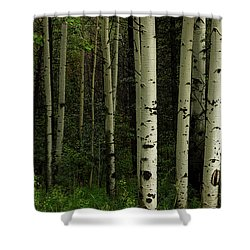 Shower Curtain featuring the photograph White Forest by James BO Insogna