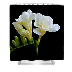 White Freesia Shower Curtain