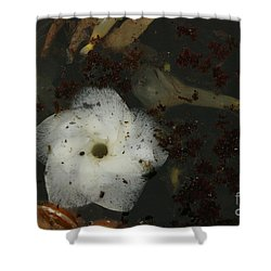 White Hawaiian Flower In The Pond Shower Curtain