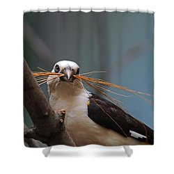 White-headed Buffalo Weaver Shower Curtain