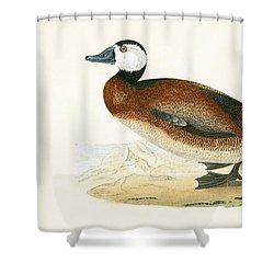 White Headed Duck Shower Curtain by English School