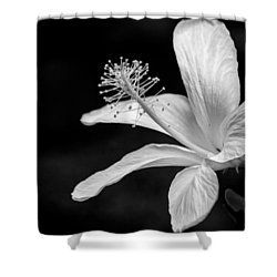 White Hibiscus Black And White Shower Curtain by Debbie Karnes