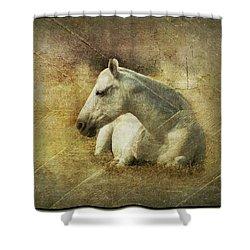White Horse Art Shower Curtain