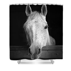 Shower Curtain featuring the photograph White Horse by Marion Johnson