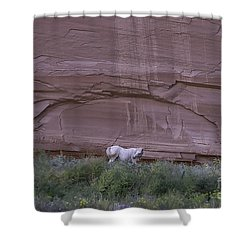 White Horse Red Canyon Shower Curtain by Anne Rodkin