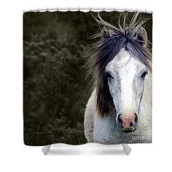 Shower Curtain featuring the photograph White Horse by Sebastian Mathews Szewczyk