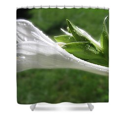 Shower Curtain featuring the photograph White Hosta Flower 46 by Maciek Froncisz