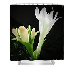 White Hostas Blooming 7 Shower Curtain by Maciek Froncisz
