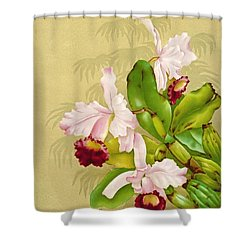 White House Orchid 1892 Shower Curtain