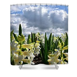 White Hyacinth Field Shower Curtain by Mihaela Pater