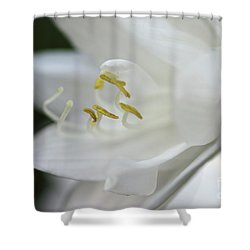 White Hydrangea Closeup Shower Curtain