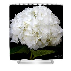 White Hydrangea Shower Curtain