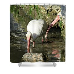 White Ibis Couple Shower Curtain