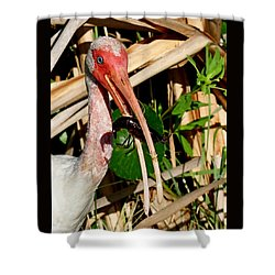 White Ibis Eating Crayfish Shower Curtain