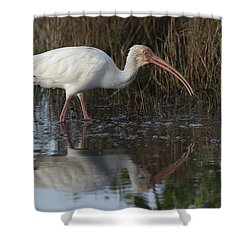 White Ibis Feeding Shower Curtain