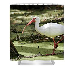 White Ibis Shower Curtain by Gary Wightman