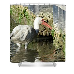 Shower Curtain featuring the photograph White Ibis Headed Home by George Randy Bass