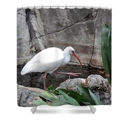 Shower Curtain featuring the photograph White Ibis by John Black