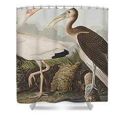 White Ibis Shower Curtain by John James Audubon