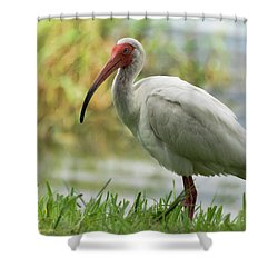White Ibis On The Florida Shore  Shower Curtain by Saija Lehtonen