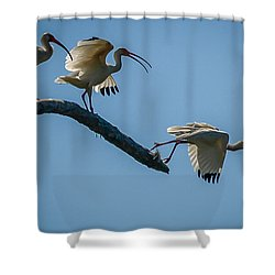 White Ibis Takeoff Shower Curtain by Tom Claud