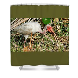 White Ibis With Crayfish Shower Curtain