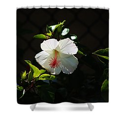 Shower Curtain featuring the photograph White In Morning Light by Craig Wood