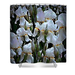 White Iris Garden Shower Curtain by Sherry Hallemeier