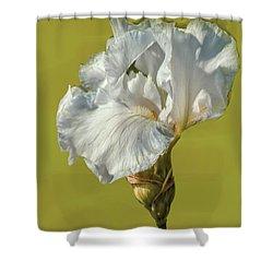White Iris June 2016 Artistic.  Shower Curtain