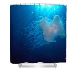 White Jellyfish Shower Curtain by Dave Fleetham - Printscapes