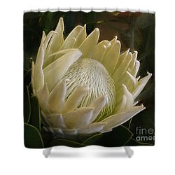 Shower Curtain featuring the photograph White King Protea By Kaye Menner by Kaye Menner