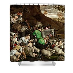 Shower Curtain featuring the photograph White Lambs by Munir Alawi