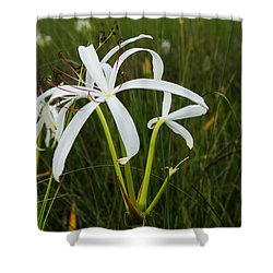 White Lilies In Bloom Shower Curtain by Christopher L Thomley