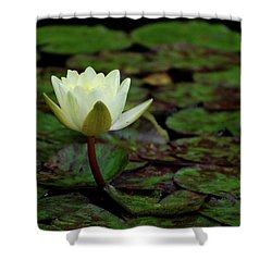 White Lily In The Pond Shower Curtain