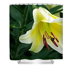 White Lily  Shower Curtain by John S