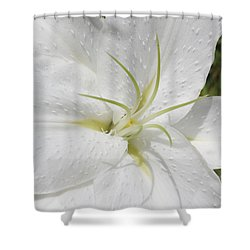 White Lily Shower Curtain by Lynne Guimond Sabean