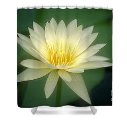 White Lily Shower Curtain by Ron Dahlquist - Printscapes