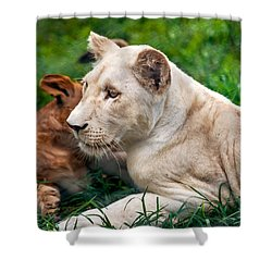 White Lion Cub Shower Curtain by Jenny Rainbow