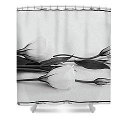 White Lisianthus  Shower Curtain