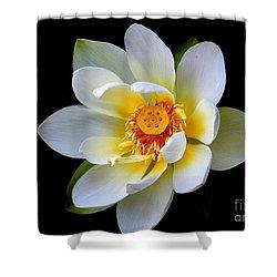White Lotus Flower Shower Curtain