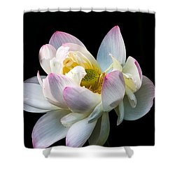 White Lotus Shower Curtain by Jay Stockhaus