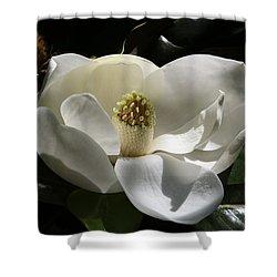 White Magnolia Flower Shower Curtain