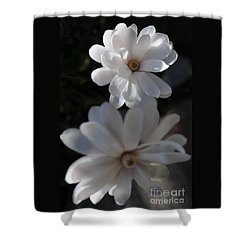 White Magnolia Shower Curtain by Haleh Mahbod