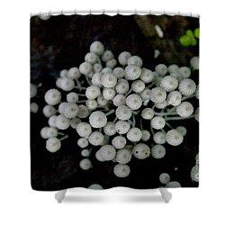 White Manoa Mushrooms Shower Curtain